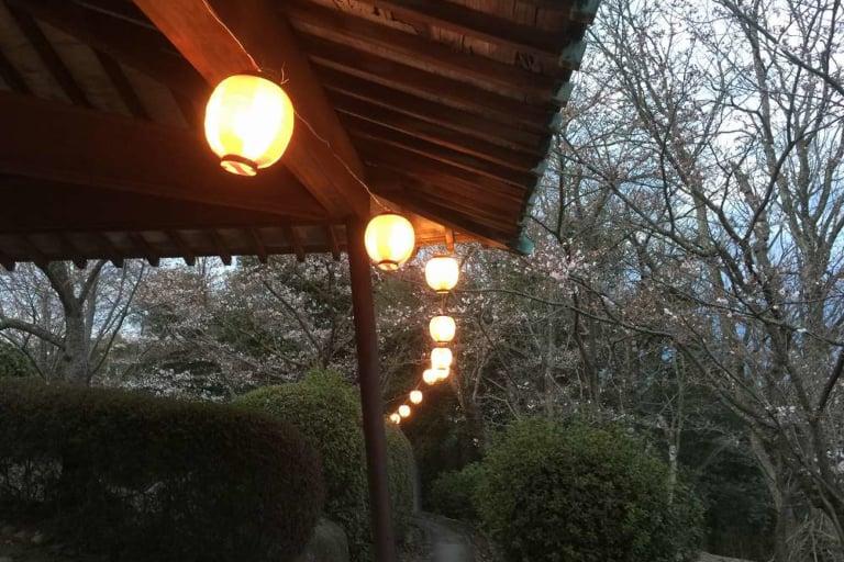 円通寺夜桜