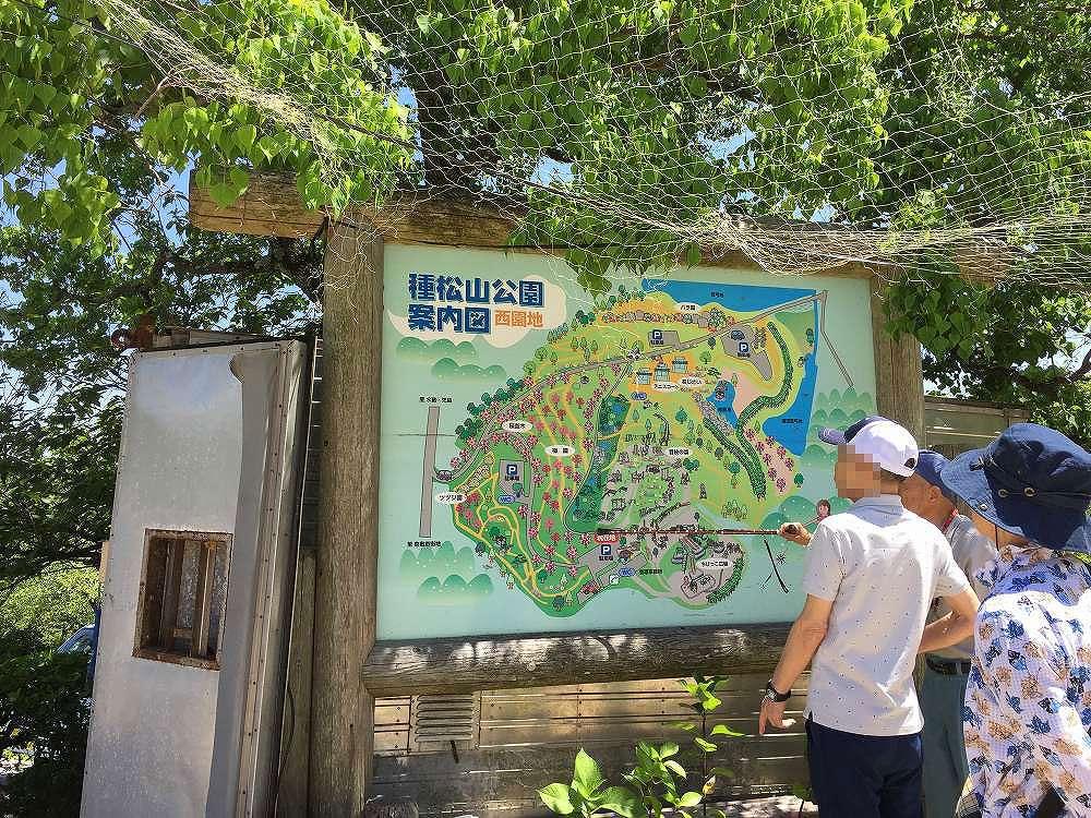 アジサイ種松山